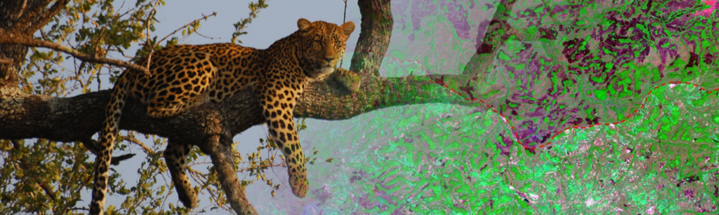 leopard_LSAT_Wegmann_earth-observation_org