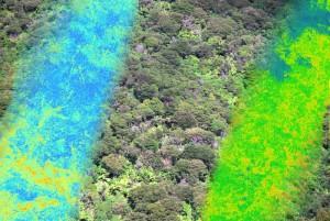 resized_forest_hymap_model_NZ