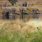 resized_earth-observation_org_WegmannBevanda_phil_trans_elefants