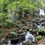 Internship at Bavarian Forest National Park